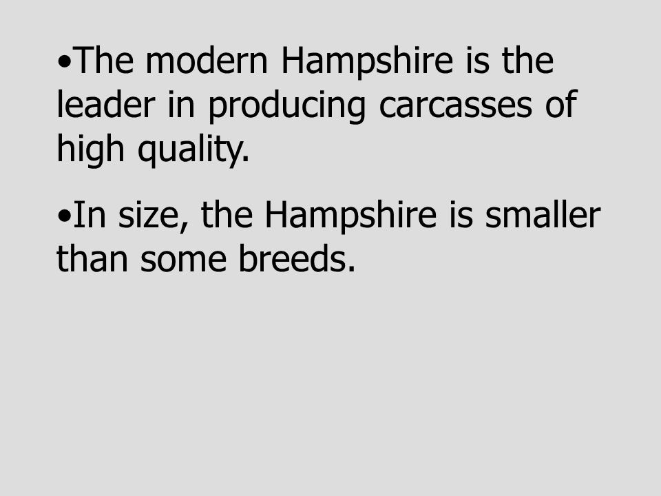 The modern Hampshire is the leader in producing carcasses of high quality.