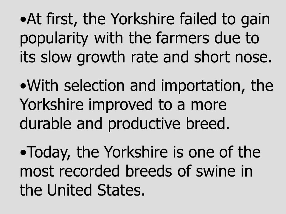 At first, the Yorkshire failed to gain popularity with the farmers due to its slow growth rate and short nose.