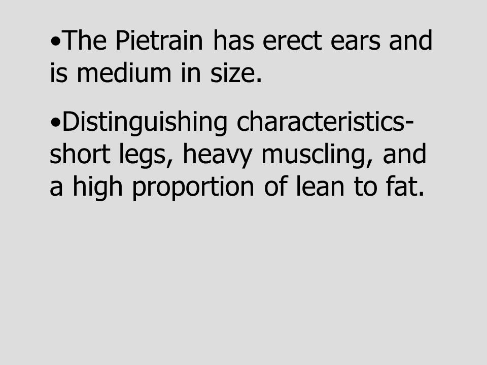The Pietrain has erect ears and is medium in size.