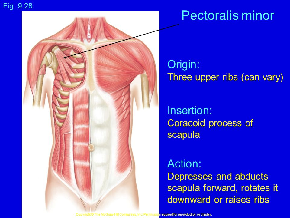 Pectoralis minor Origin: Insertion: Action: