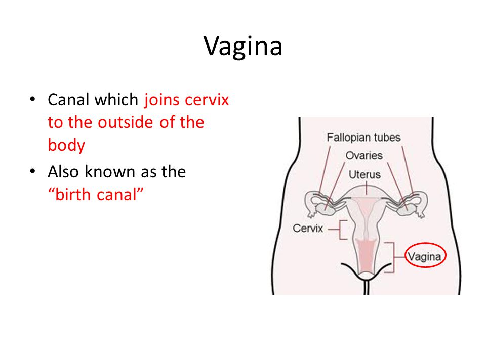 Vagina Canal which joins cervix to the outside of the body