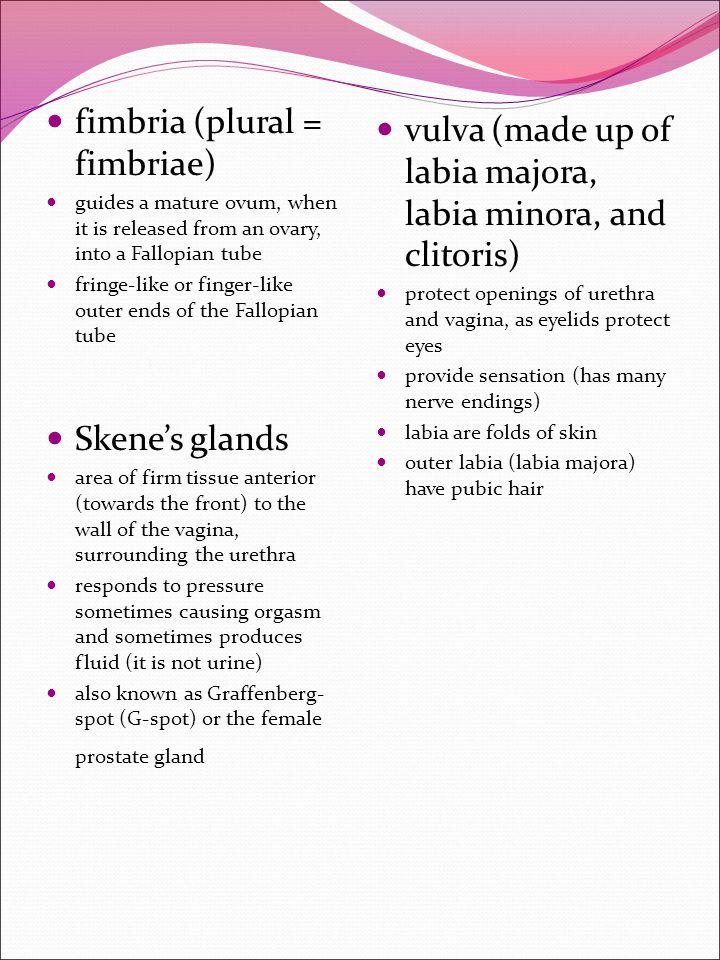 fimbria (plural = fimbriae)
