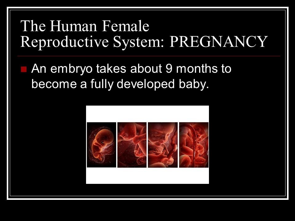 The Human Female Reproductive System: PREGNANCY