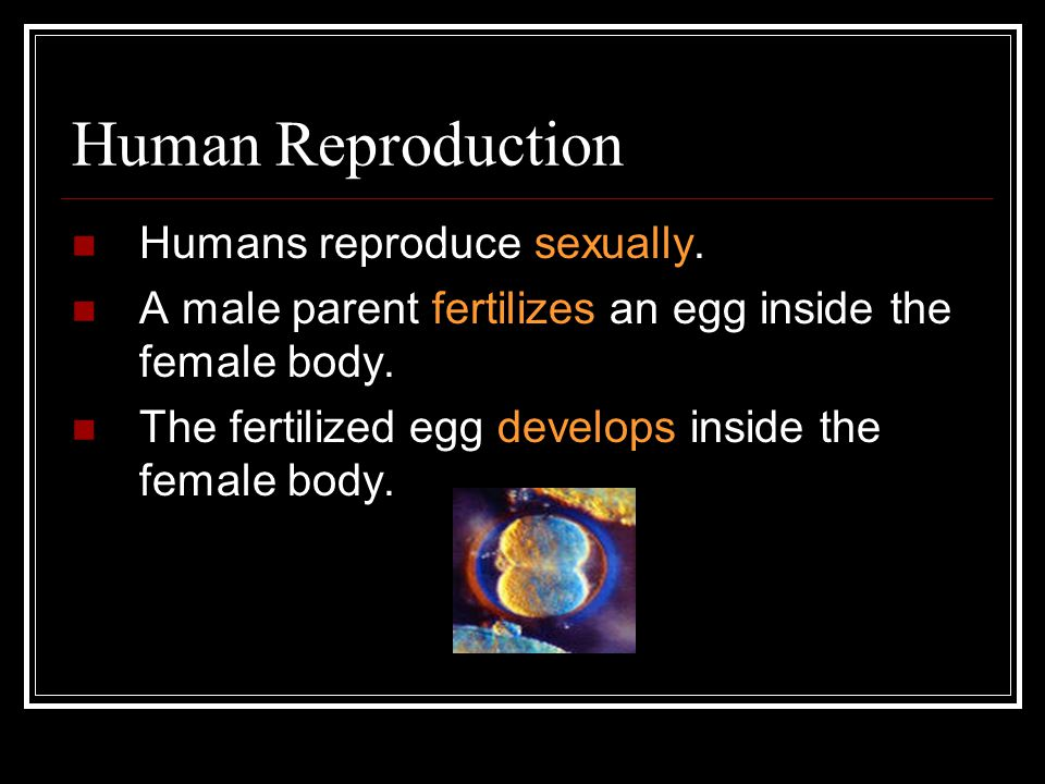 Human Reproduction Humans reproduce sexually.