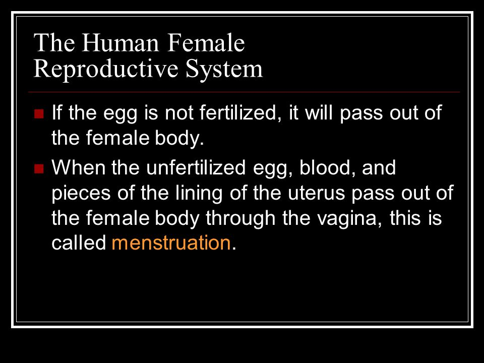 The Human Female Reproductive System