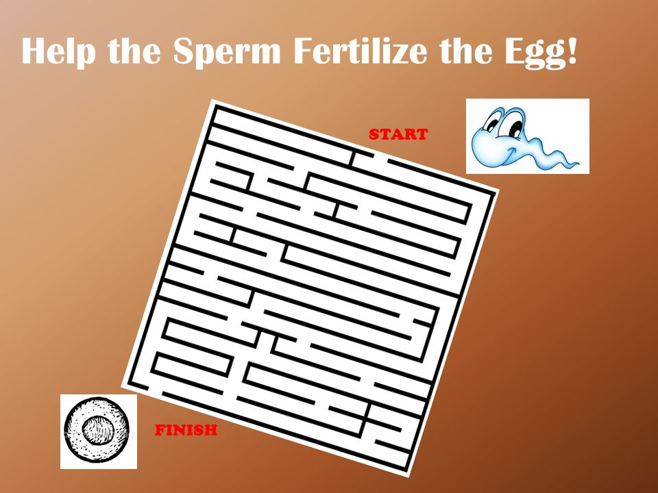 Help the Sperm Fertilize the Egg!