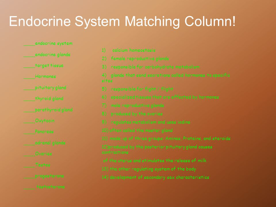 Endocrine System Matching Column!
