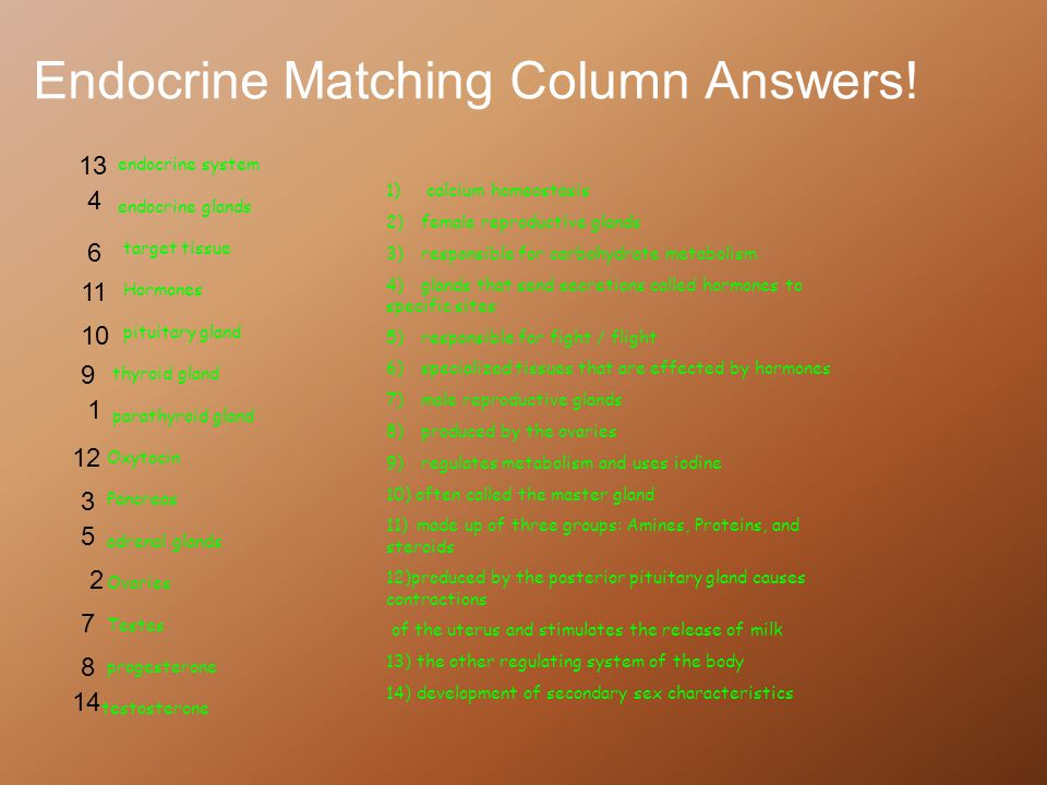 Endocrine Matching Column Answers!