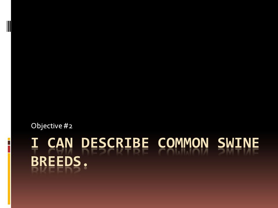 I can describe common swine breeds.