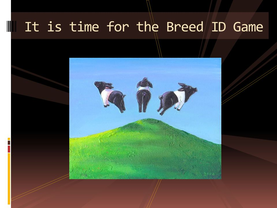 It is time for the Breed ID Game