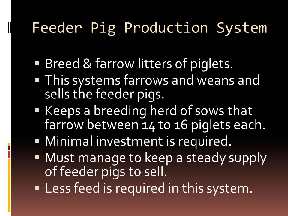 Feeder Pig Production System