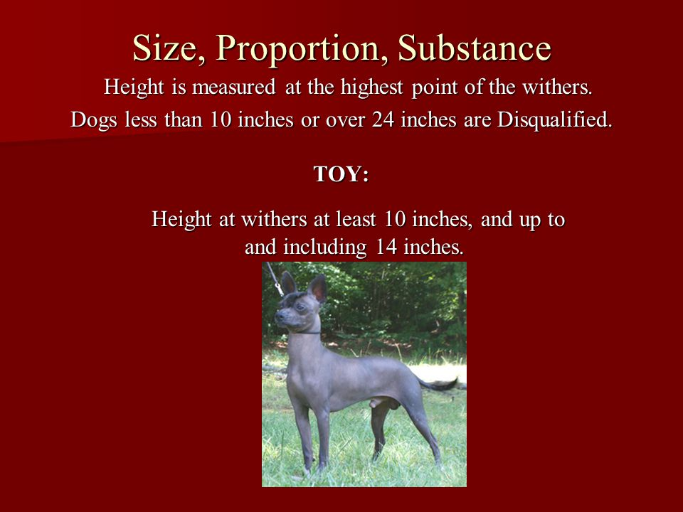 Size, Proportion, Substance