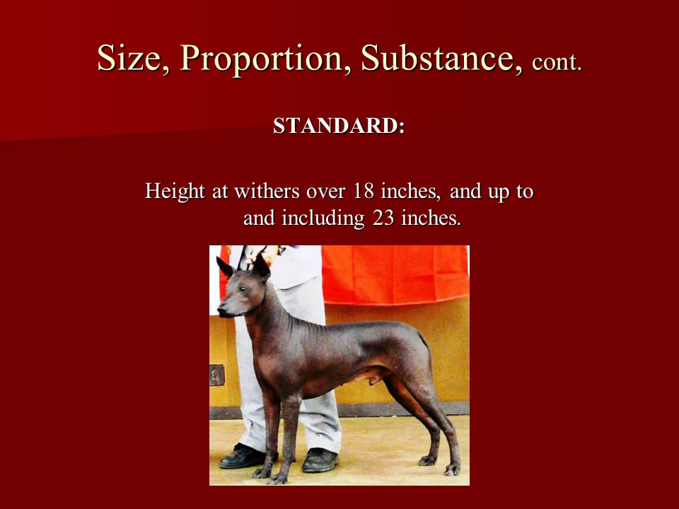 Size, Proportion, Substance, cont.