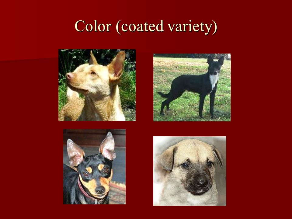 Color (coated variety)