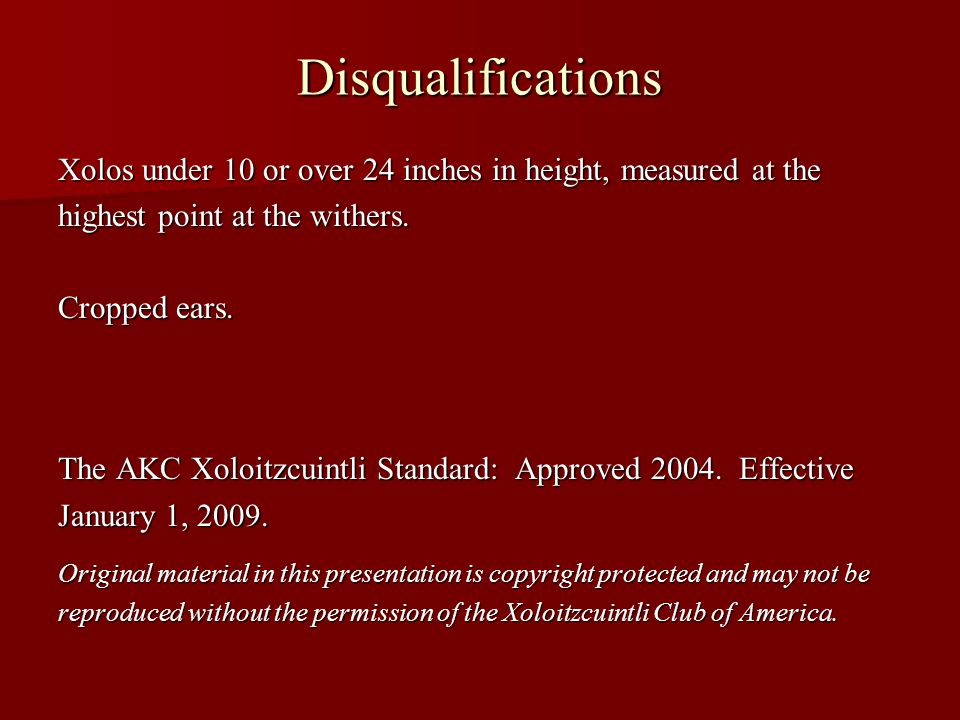 Disqualifications Xolos under 10 or over 24 inches in height, measured at the. highest point at the withers.
