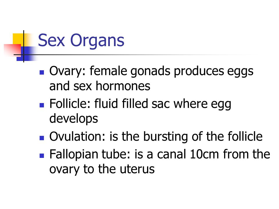 Sex Organs Ovary: female gonads produces eggs and sex hormones