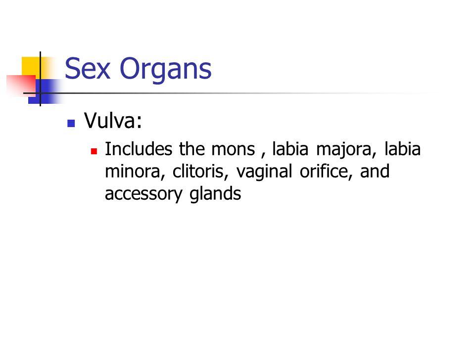 Sex Organs Vulva: Includes the mons , labia majora, labia minora, clitoris, vaginal orifice, and accessory glands.