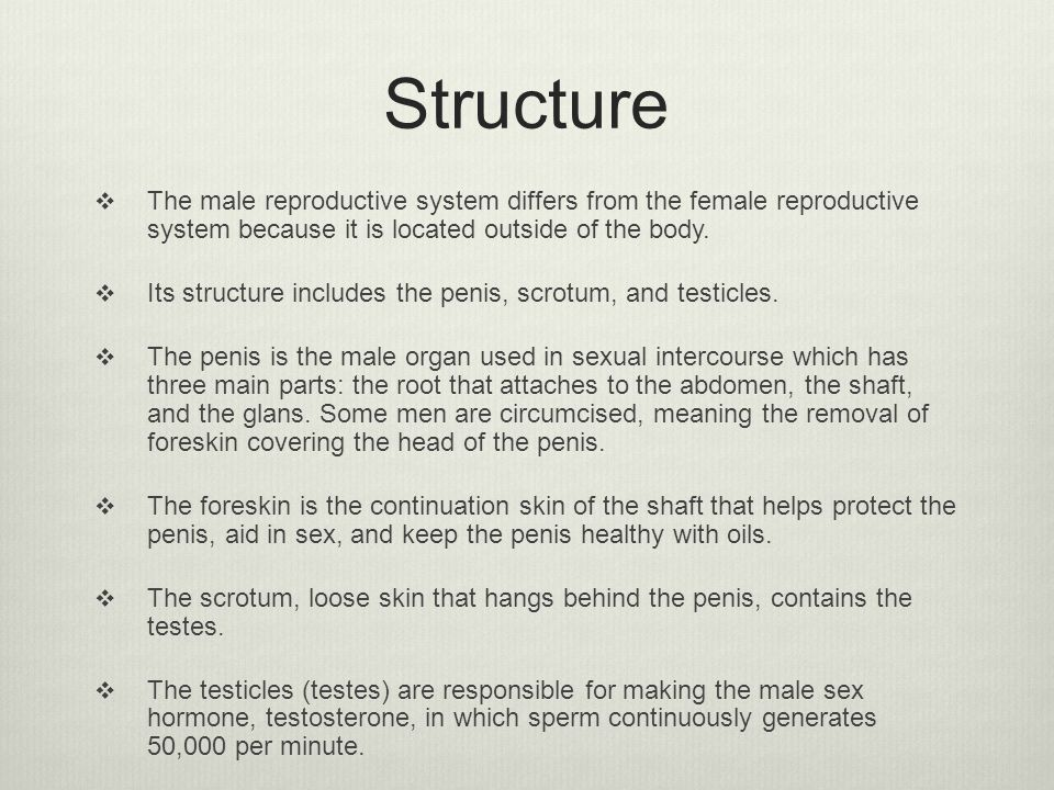 Structure The male reproductive system differs from the female reproductive system because it is located outside of the body.