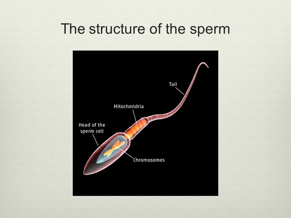 The structure of the sperm