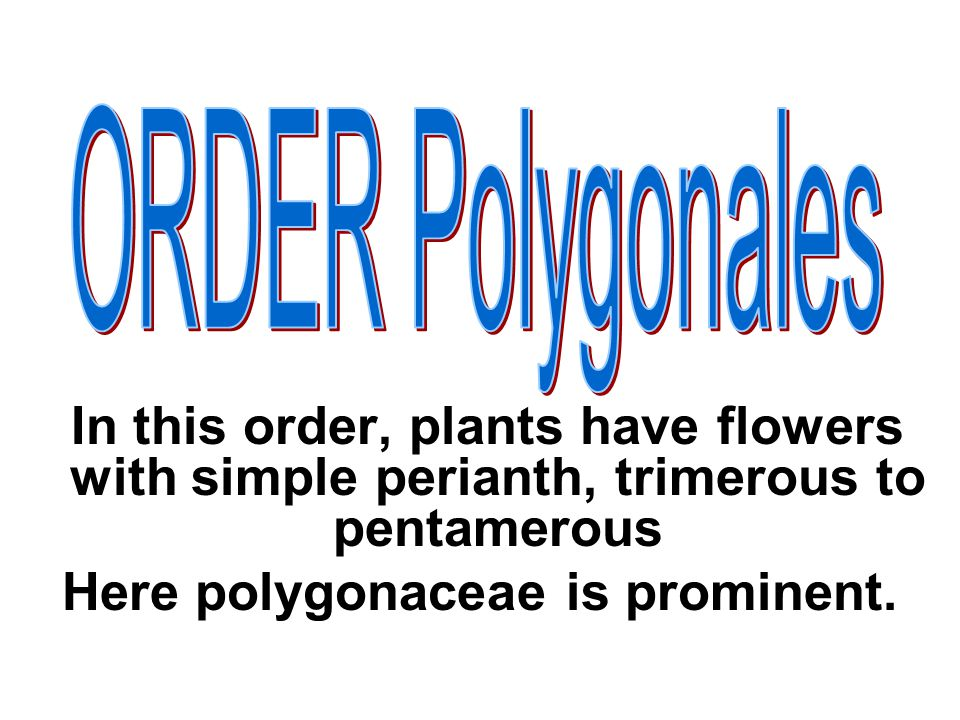 Here polygonaceae is prominent.