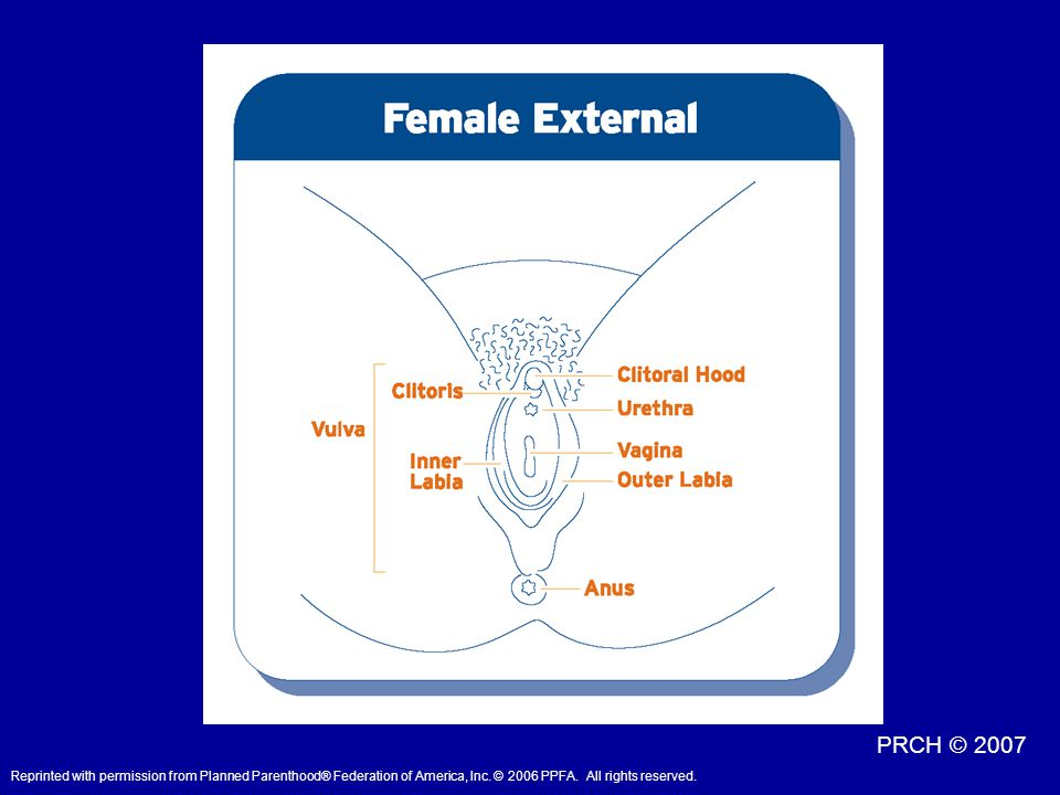 Definitions: Mon Pubis: The fleshy pad of skin that protects the pubic bone in females. This is where most of a woman's pubic hair grows.