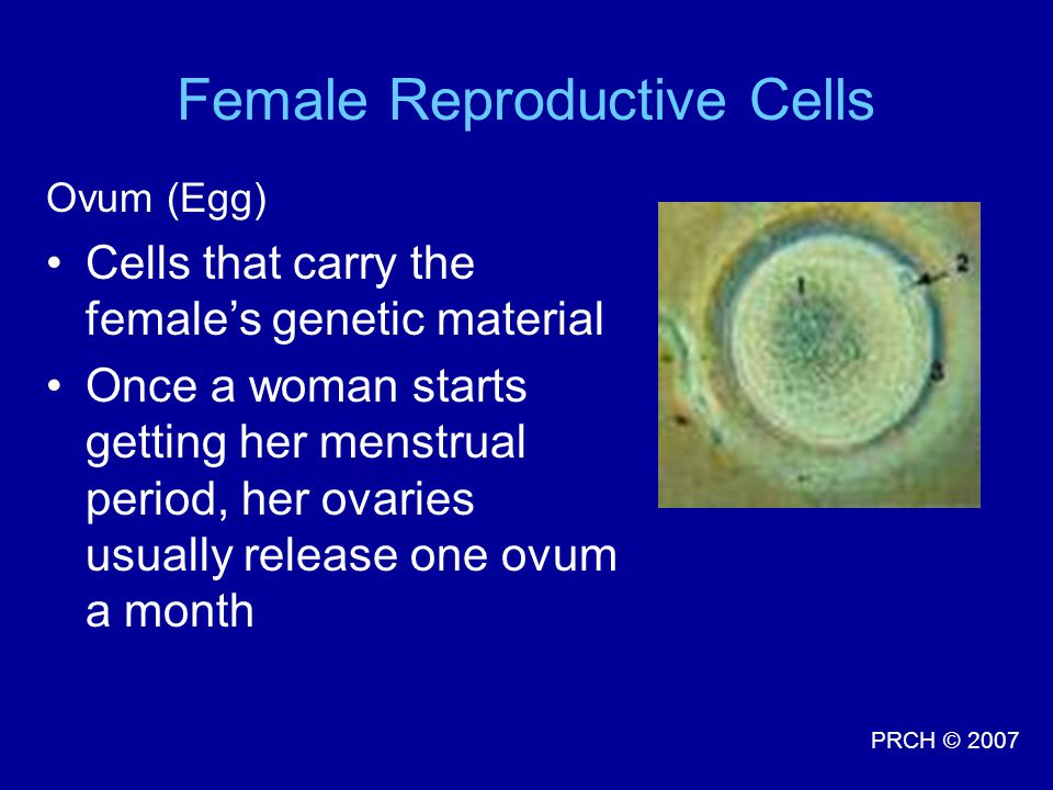 Female Reproductive Cells