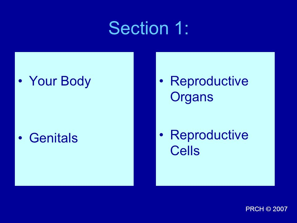 Section 1: Your Body Genitals Reproductive Organs Reproductive Cells
