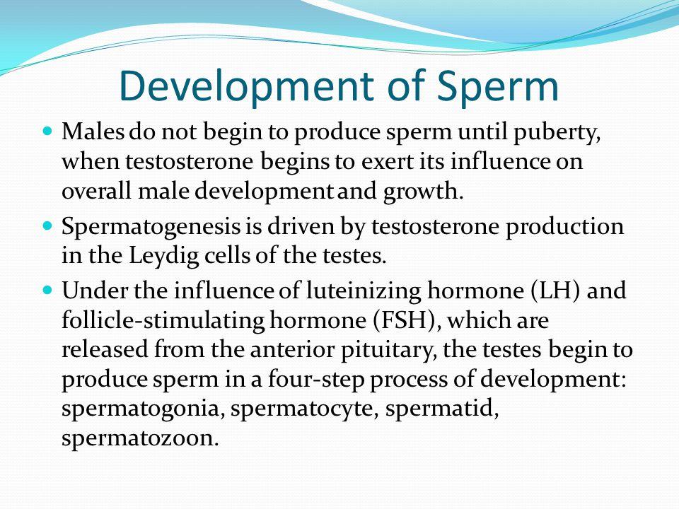 Development of Sperm