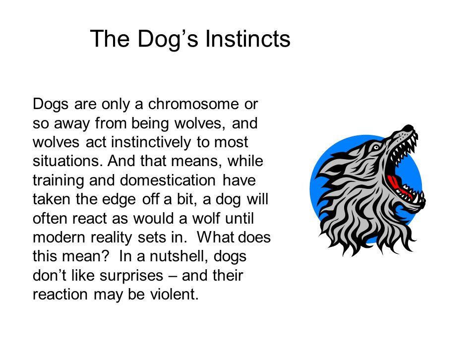 The Dog's Instincts
