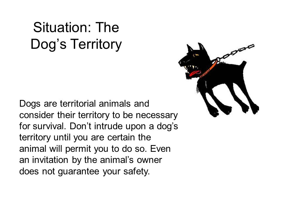 Situation: The Dog's Territory