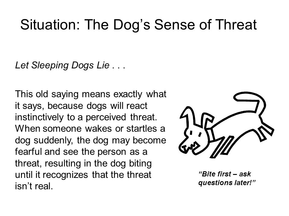 Situation: The Dog's Sense of Threat
