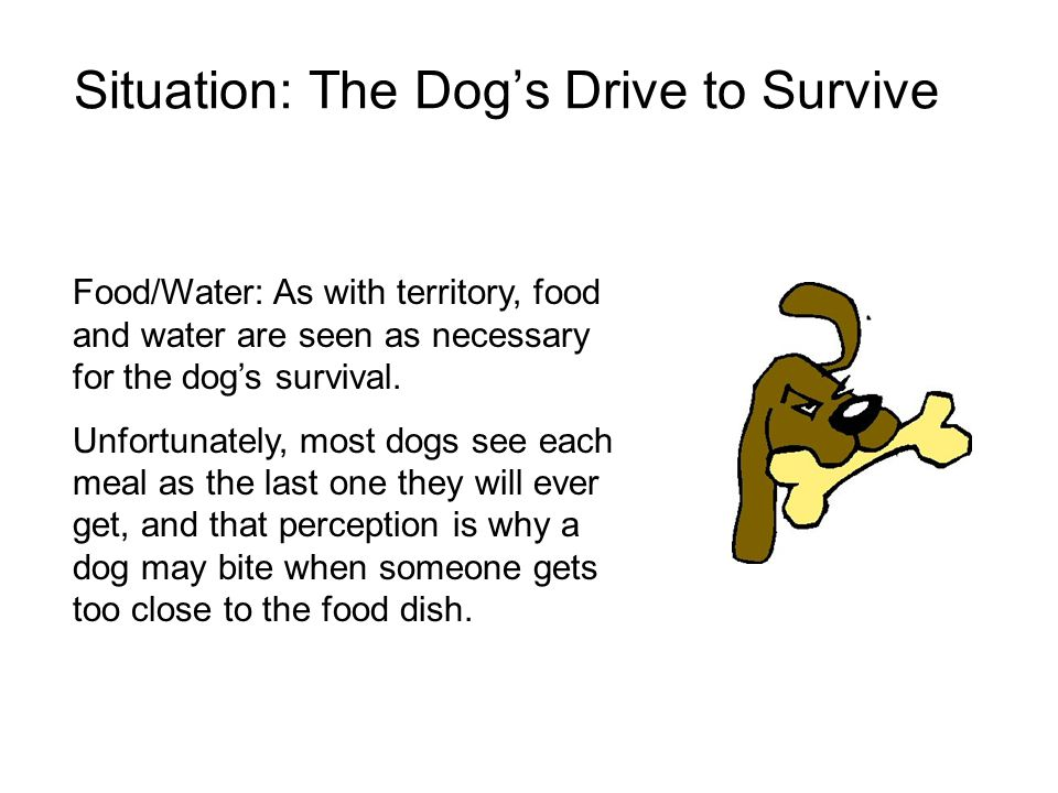 Situation: The Dog's Drive to Survive