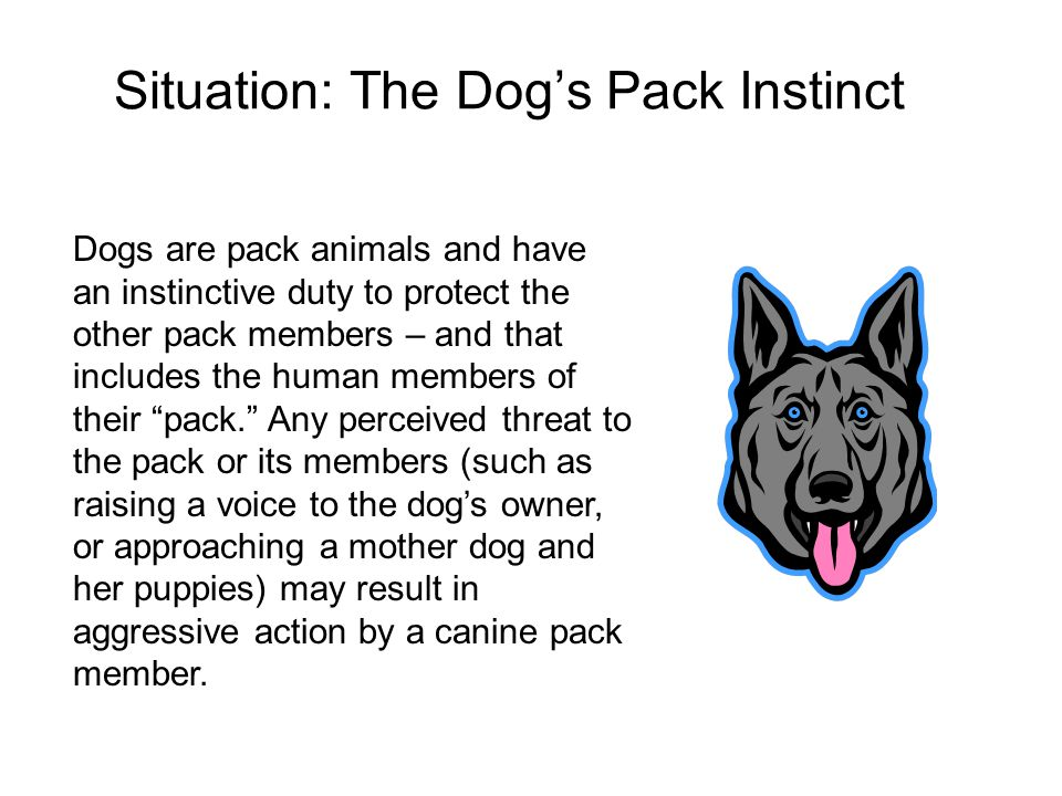 Situation: The Dog's Pack Instinct