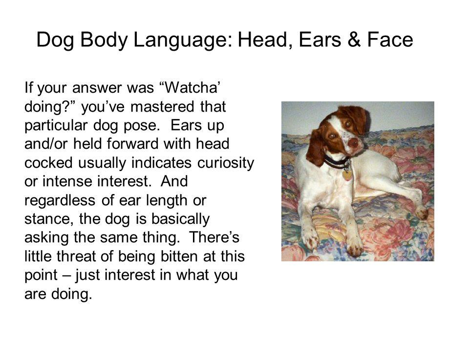 Dog Body Language: Head, Ears & Face