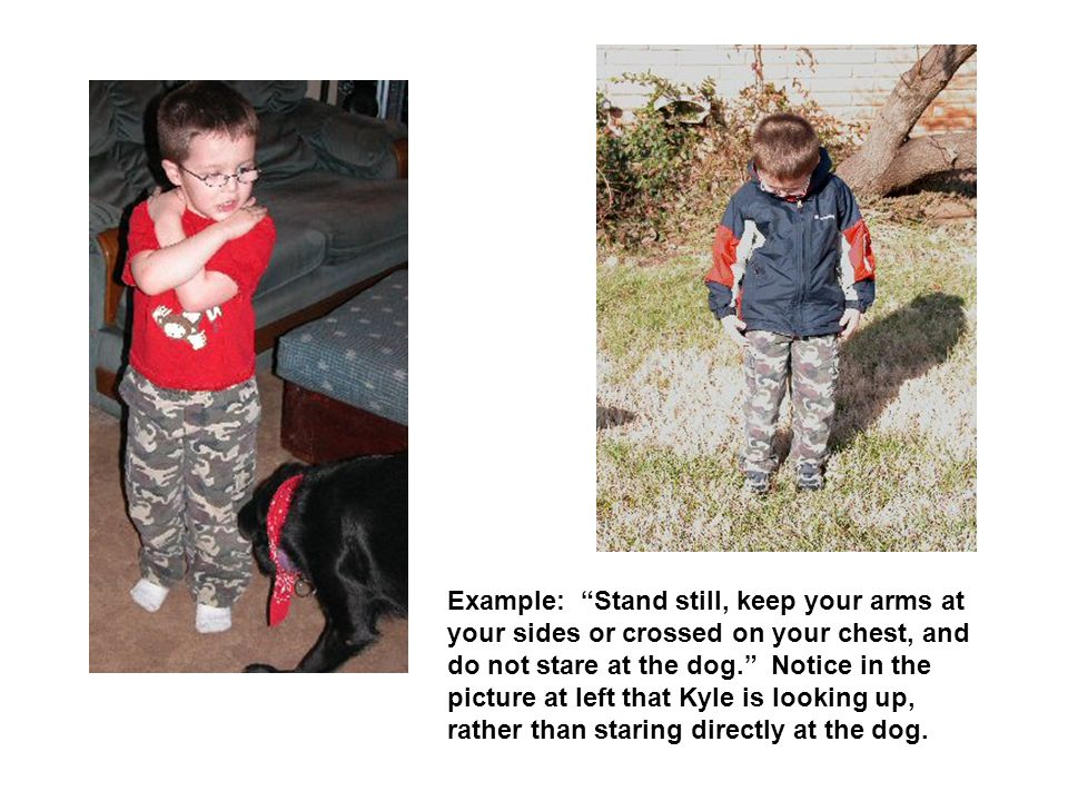 Example: Stand still, keep your arms at your sides or crossed on your chest, and do not stare at the dog. Notice in the picture at left that Kyle is looking up, rather than staring directly at the dog.