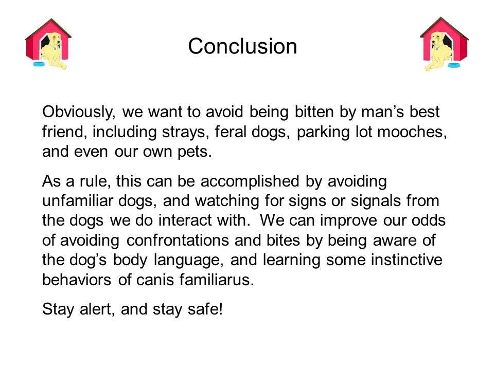Conclusion Obviously, we want to avoid being bitten by man's best friend, including strays, feral dogs, parking lot mooches, and even our own pets.