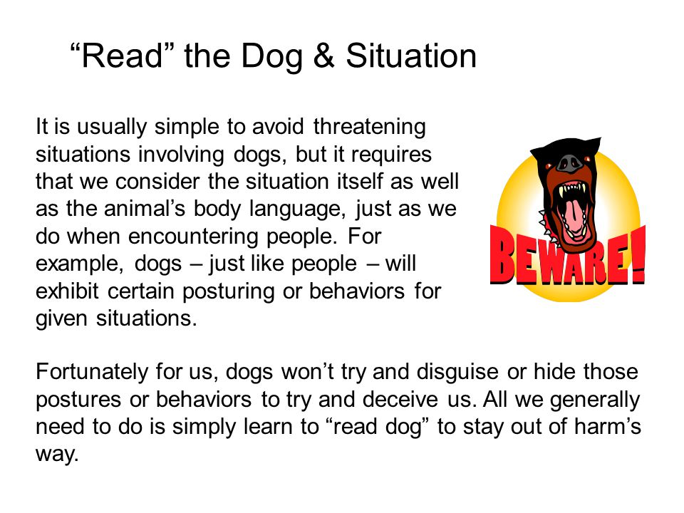 Read the Dog & Situation