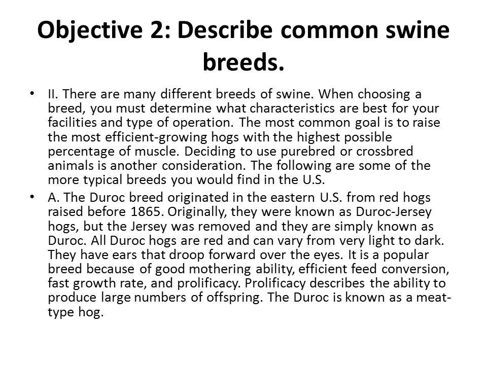 Objective 2: Describe common swine breeds.
