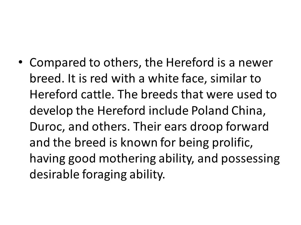 Compared to others, the Hereford is a newer breed