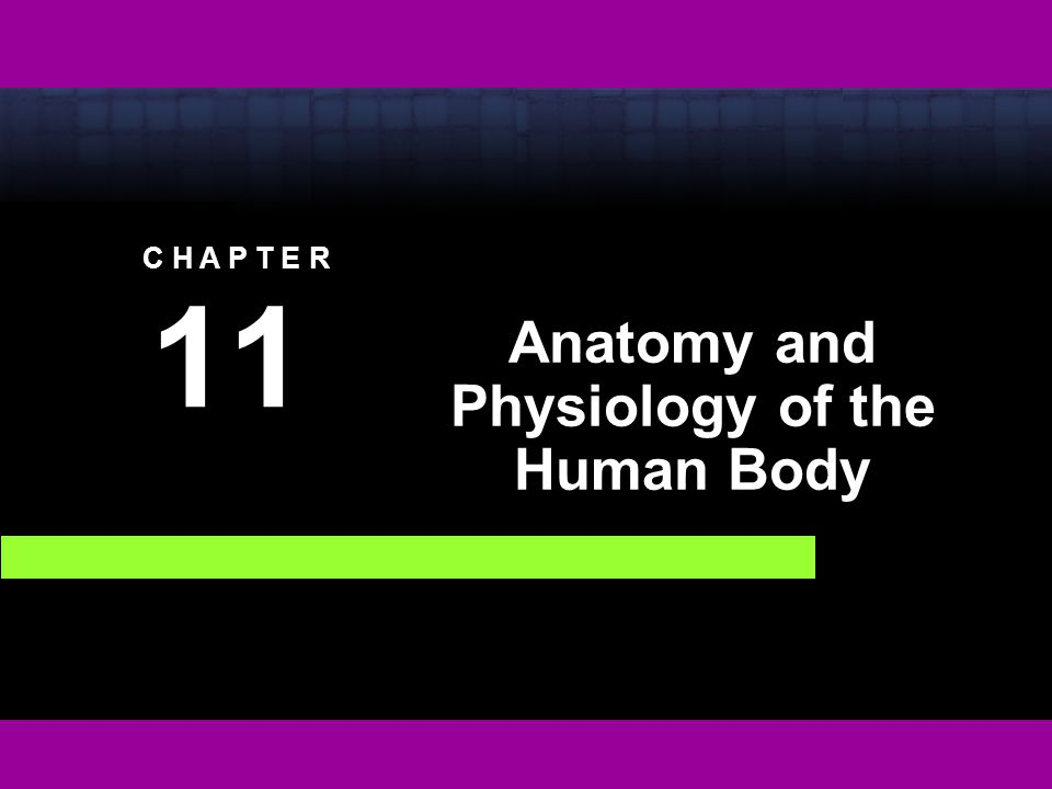 Anatomy and Physiology of the Human Body