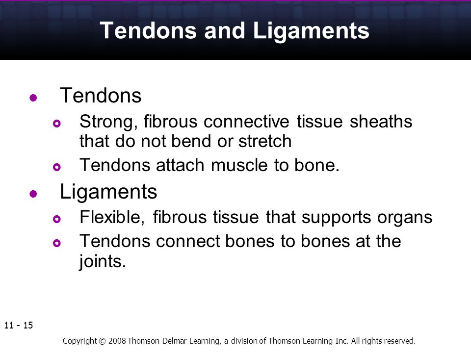 Tendons and Ligaments Tendons Ligaments