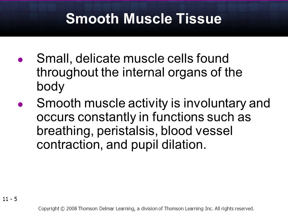 Smooth Muscle Tissue Small, delicate muscle cells found throughout the internal organs of the body.