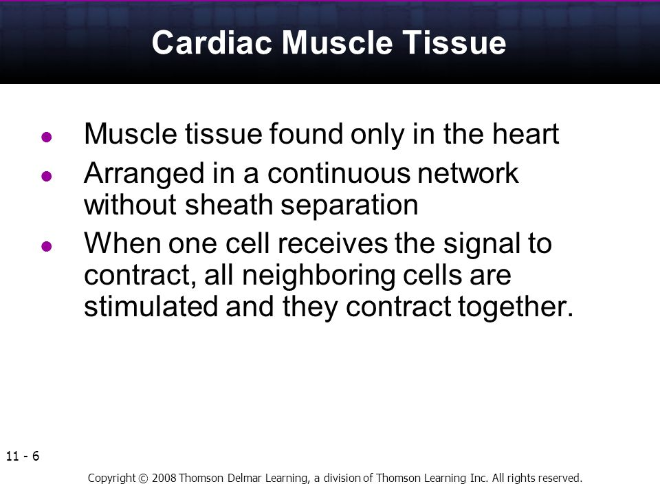 Cardiac Muscle Tissue Muscle tissue found only in the heart