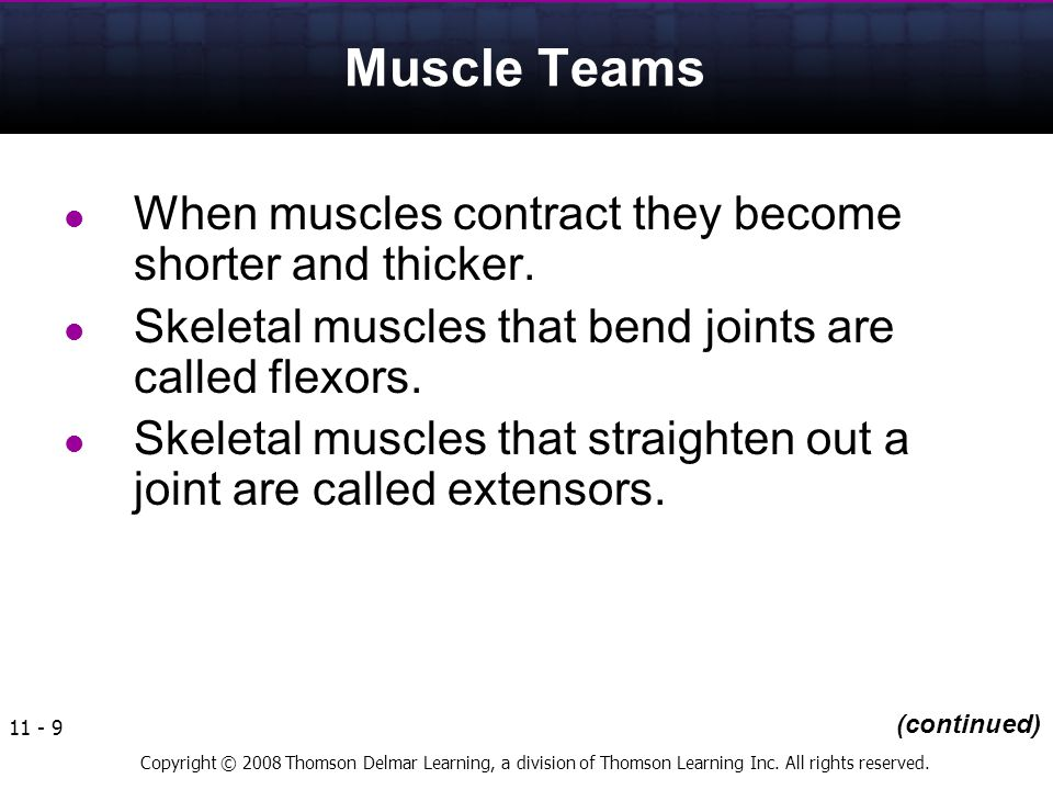 Muscle Teams When muscles contract they become shorter and thicker.