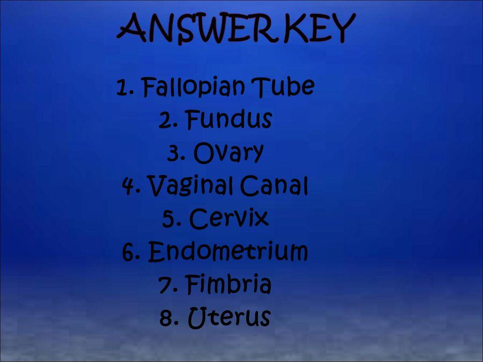 Answer Key 1. Fallopian Tube 2. Fundus 3. Ovary 4.