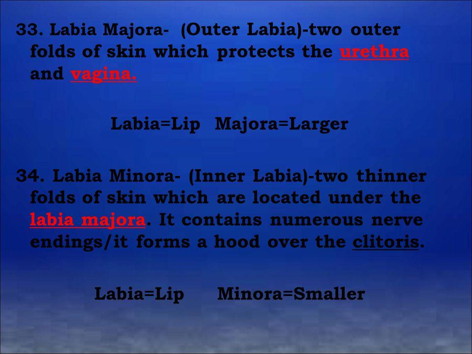 Labia=Lip Majora=Larger Labia=Lip Minora=Smaller
