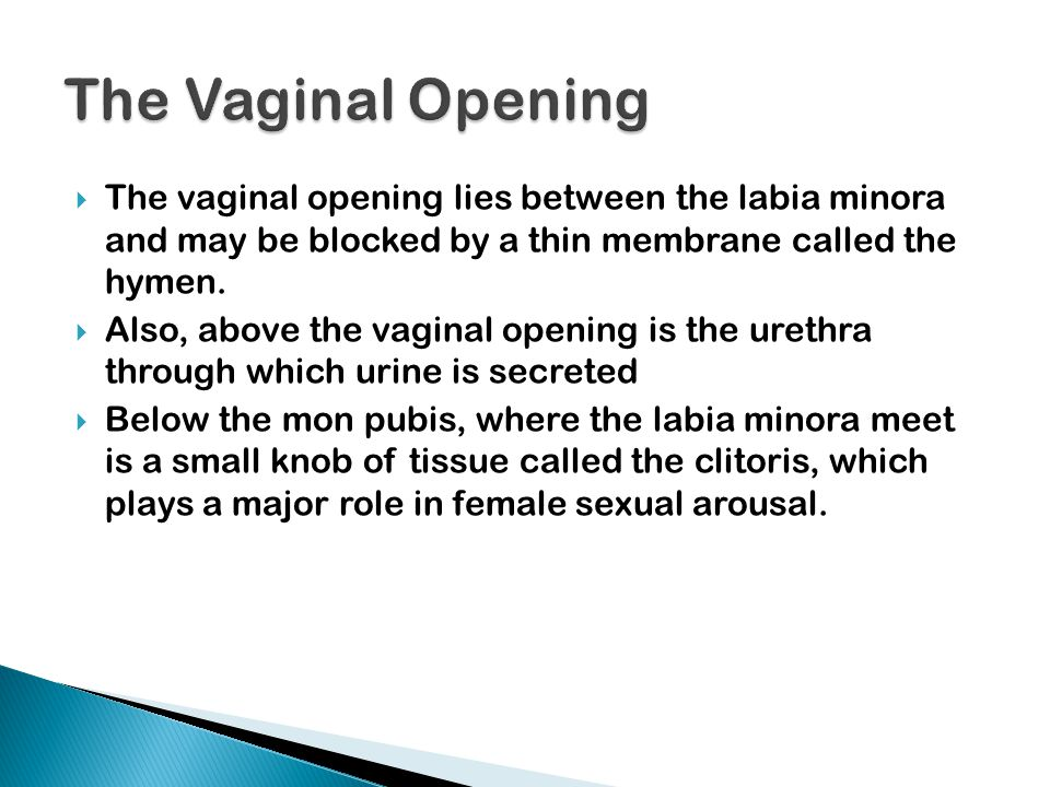 The Vaginal Opening The vaginal opening lies between the labia minora and may be blocked by a thin membrane called the hymen.
