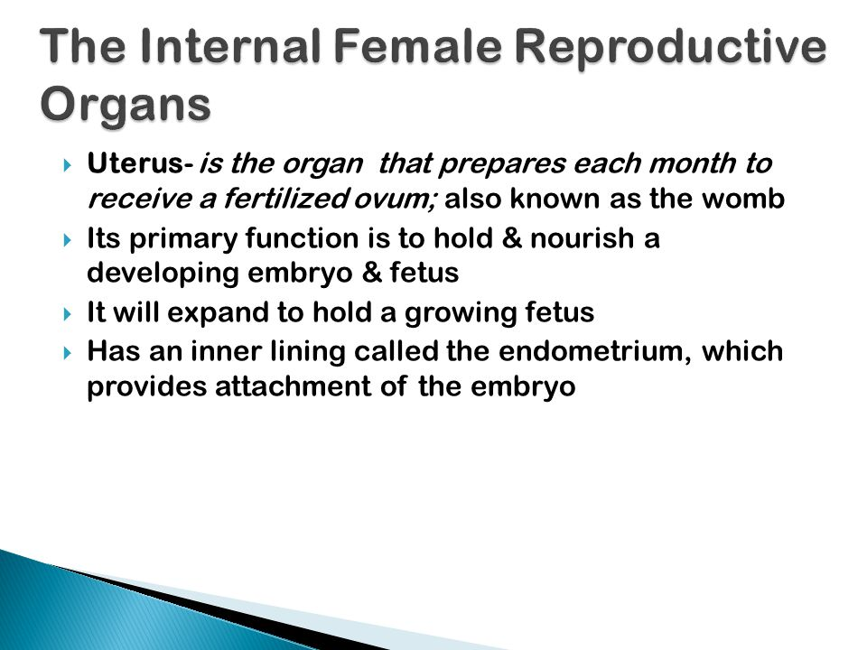 The Internal Female Reproductive Organs