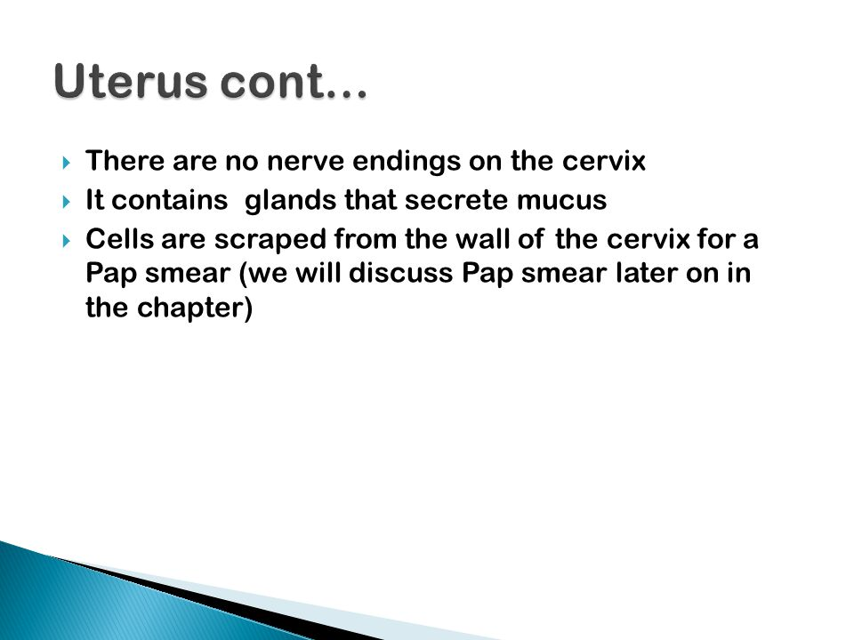 Uterus cont… There are no nerve endings on the cervix