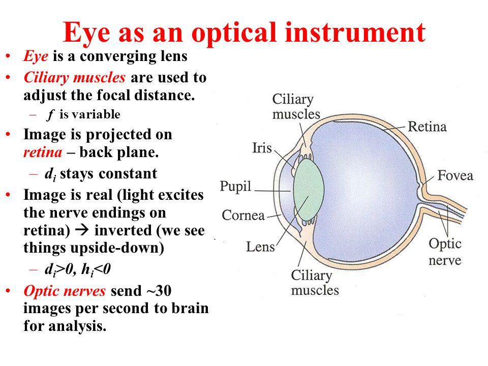 Eye as an optical instrument